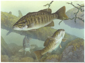 practical smallie fishing